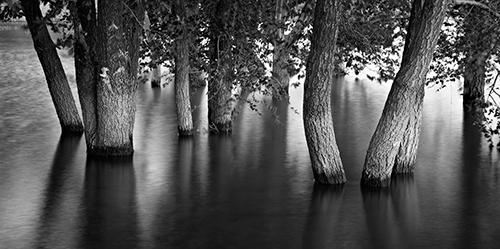 trees at the lake