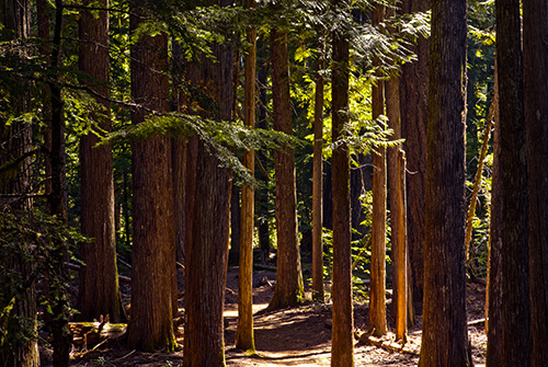 trail to Proxy Falls