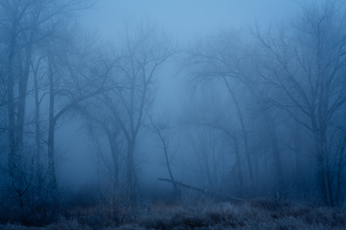 Foggy morning near Lake Lowell in Nampa, Idaho.